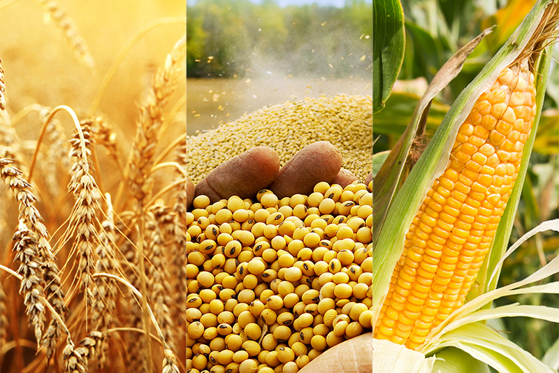 Agro Commodities, Agricultural Product in Dubai, Sharjah, UAE