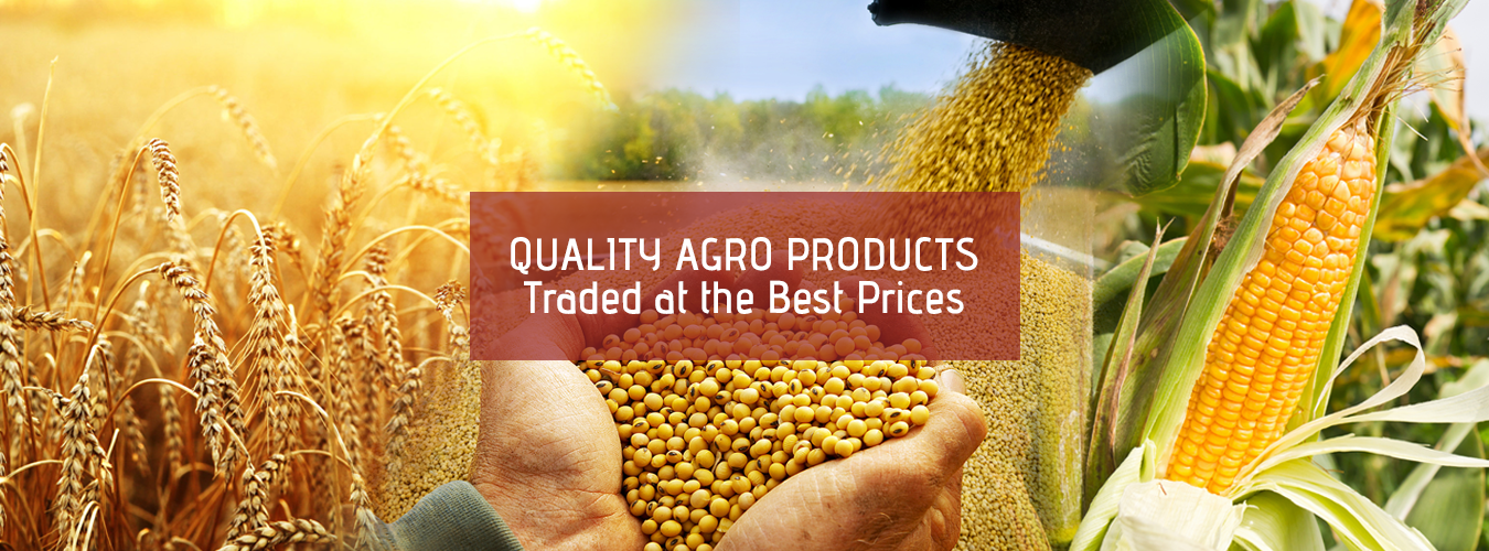 Agro Products Trading at the best price in Dubai, Sharjah, UAE